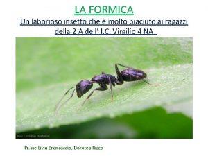 LA FORMICA Un laborioso insetto che molto piaciuto