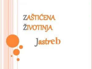 ZATIENA IVOTINJA Jastreb JASTREB Jastreb je ptica grabljivica