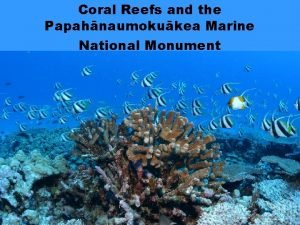 Coral Reefs and the Papahnaumokukea Marine National Monument