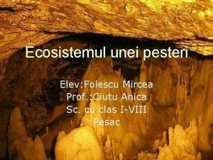 Ecosistemul unei pesteri Elev Folescu Mircea Prof Ciutu