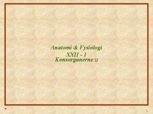 Anatomi Fysiologi XXII 1 Knsorganerne U 1 Anatomi