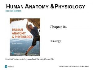 HUMAN ANATOMY PHYSIOLOGY Second Edition Chapter 04 Histology