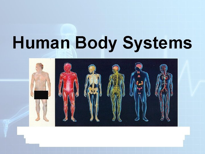Human Body Systems Regulation and Homeostasis in the