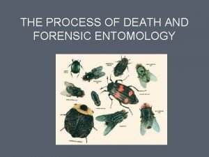 THE PROCESS OF DEATH AND FORENSIC ENTOMOLOGY The