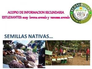 ACOPIO DE INFORMACION SECUNDARIA ESTUDIANTES susy lorena arevalo