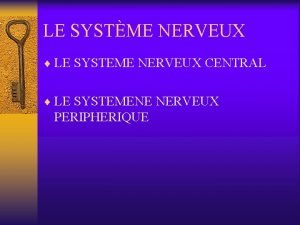 LE SYSTME NERVEUX LE SYSTEME NERVEUX CENTRAL LE