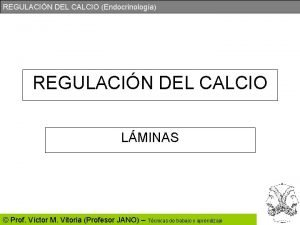 REGULACIN DEL CALCIO Endocrinologa REGULACIN DEL CALCIO LMINAS