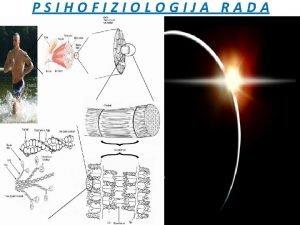 PSIHOFIZIOLOGIJA RADA PSIHOFIZIOLOGIJA RADA interdisciplinarna nauka sinteza graninih