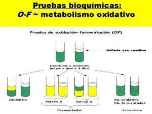 Pruebas bioqumicas OF metabolismo oxidativo Pruebas bioqumicas OF