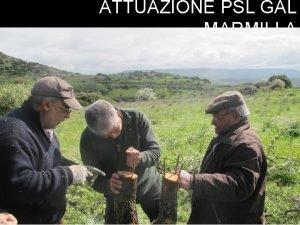 ATTUAZIONE PSL GAL MARMILLA ATTUAZIONE PSL GAL MARMILLA