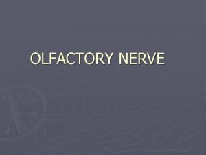 OLFACTORY NERVE Introduction First cranial nerve One of