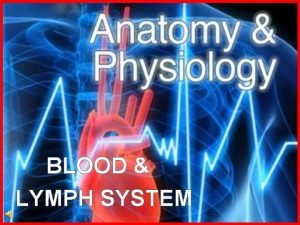 BLOOD LYMPH SYSTEM What is blood Blood is
