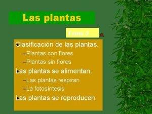 Las plantas Tema 3 Clasificacin de las plantas