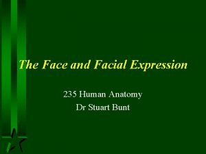 The Face and Facial Expression 235 Human Anatomy