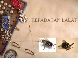 KEPADATAN LALAT Pendahuluan w Lalat merupakan salah satu