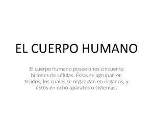 EL CUERPO HUMANO El cuerpo humano posee unos