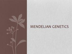 MENDELIAN GENETICS How does Genetics connect with DNA