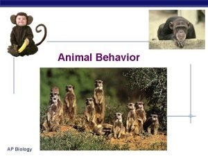 Animal Behavior AP Biology What is behavior Behavior