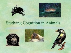 Studying Cognition in Animals Cognition Cognition study of