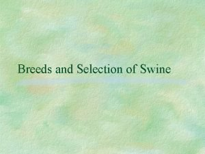 Breeds and Selection of Swine Objectives List terms