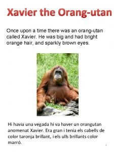 Xavier the Orangutan Once upon a time there