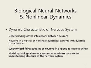 Biological Neural Networks Nonlinear Dynamics Dynamic Characteristic of