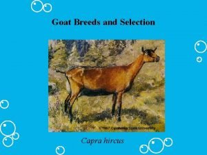 Goat Breeds and Selection Capra hircus Goat Breeds