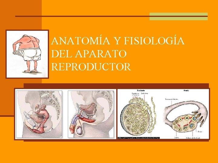 ANATOMA Y FISIOLOGA DEL APARATO REPRODUCTOR Aparato reproductor