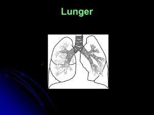 Lunger Lungerumfang Lungernes funktionervirkninger Rygning Virkninger p kroppen
