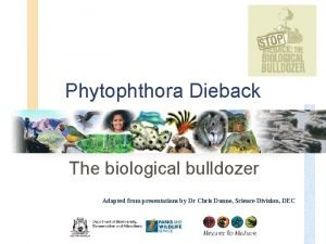 Phytophthora Dieback The biological bulldozer Adapted from presentations