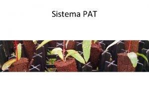 Sistema PAT Caractersticas Principales Excelente estructura y aireacin