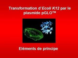 Transformation dEcoli K 12 par le plasmide p