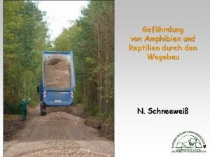 Gefhrdung von Amphibien und Reptilien durch den Wegebau
