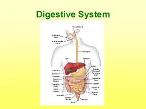 Digestive System Mouth Digestion begins in the begins