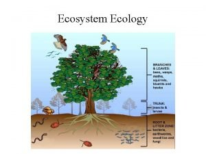 Ecosystem Ecology Basic ecosystem nutrient cycling in red