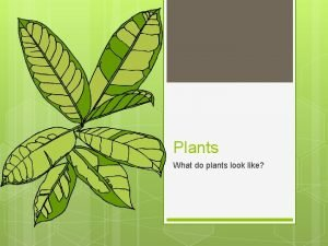 Plants What do plants look like Parts of