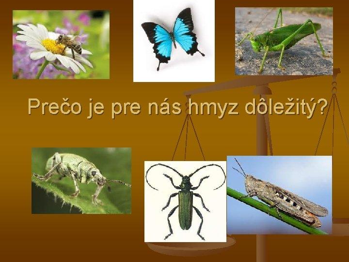 Preo je pre ns hmyz dleit HMYZ Hmyz