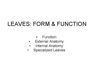 LEAVES FORM FUNCTION Function External Anatomy Internal Anatomy