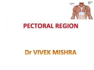 PECTORAL REGION Skin Superficial fascia Deep fascia Muscles