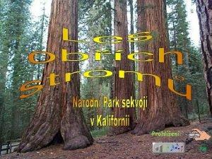 Prohlen J Nrodn park Sequoia Na vod si