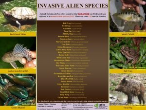 INVASIVE ALIEN SPECIES Animals introduced from other countries