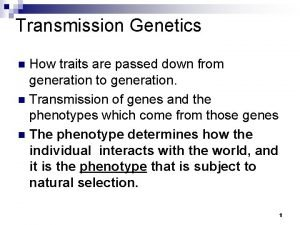 Transmission Genetics How traits are passed down from