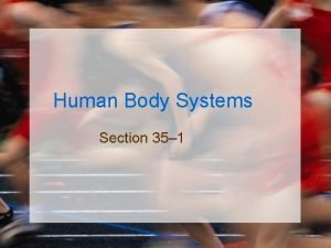 Human Body Systems Section 35 1 Human Body