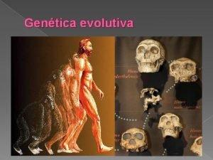 Gentica evolutiva Gentica Evolutiva a cincia que estuda