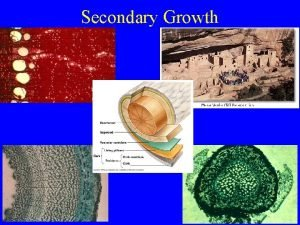 Secondary Growth Secondary Growth Two types of growth