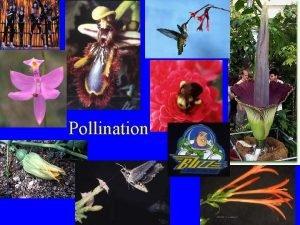 Pollination Pollination Definition transfer of pollen from stamen