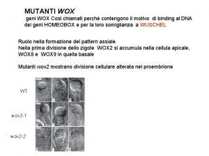 MUTANTI WOX geni WOX Cosi chiamati perch contengono