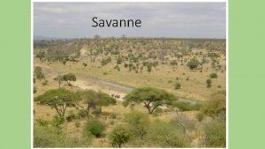 Savanne Was ist die Savanne Die Savanne ist