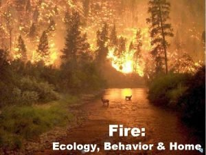 Fire Ecology Behavior Home Fire is fire Is