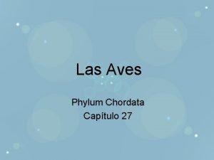 Las Aves Phylum Chordata Captulo 27 Contribuciones biolgicas